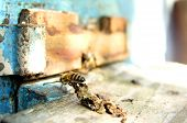 stock photo of honey bee hive  - bee in bee-entrance 2