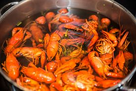 picture of crawdads  - freshly cooked crayfish with dill and salt in a large saucepan - JPG