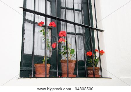 Flowerpots on a window