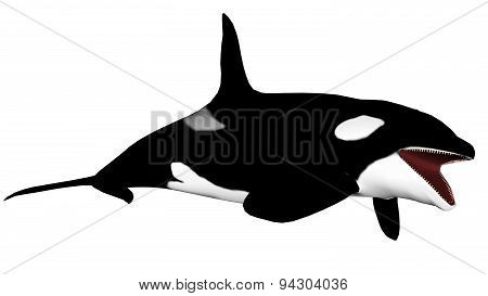 Killer whale opening mouth - 3D render