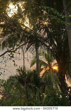 Sunrise bursting through green garden