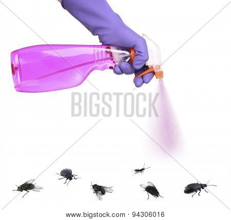 Plastic sprayer with insecticide and stinging insect isolated on white