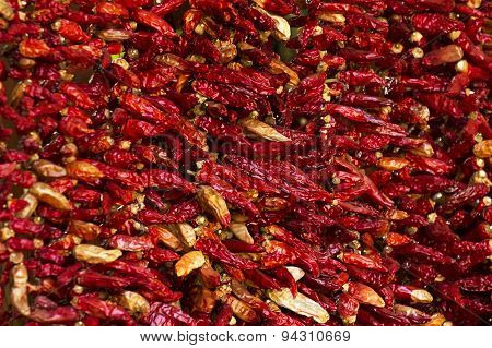 Colorful chili pepperS hanging for sale at a market