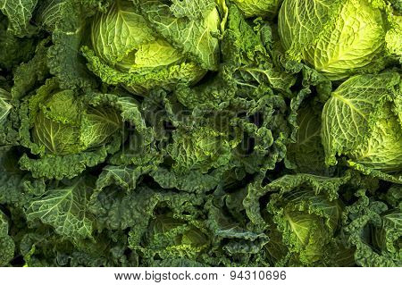 Green freash cabbage background