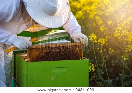 Apiarist Checking The Hives