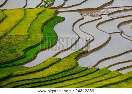 Terraced rice field in water season in Mu Cang Chai, Vietnam
