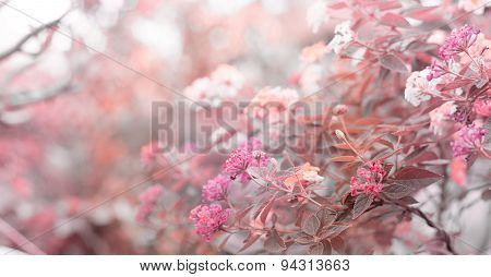 Beautiful  Flower - Nature Background