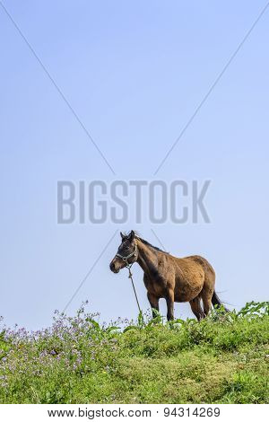 Healthy Horse On A Hill