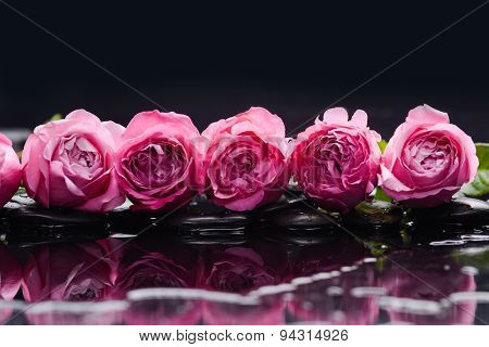 Still life with row of rose and wet stones