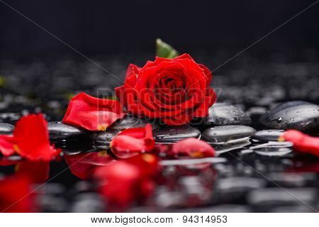 red rose with candle and therapy stones