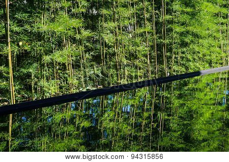 Bamboo With Reflect In Water
