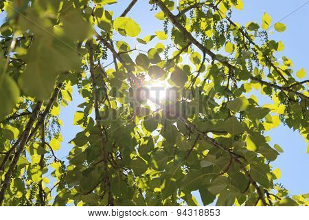 The sun between the leaves of the tree