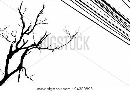 Black And White Death Tree