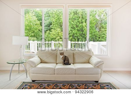 Family Cat Enjoying Sofa Within Living Room