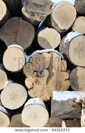 Ends of Logs in Winter