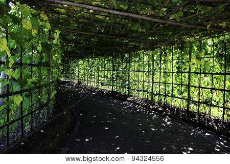 Vegetable Garden Shady