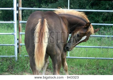 Itchy Colt