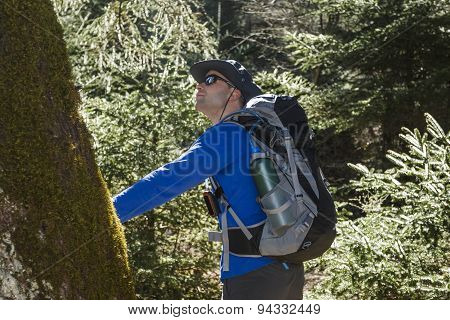 Man Looking At Tree In The Forest