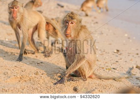 Monkey On The Shore