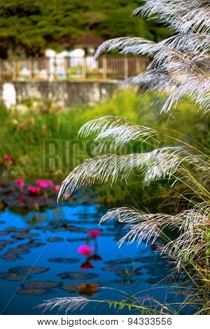 RELAXING POND OF LILIES AND TALL GRASS TOBAGO NATURE