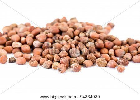 Seeds Of Radish