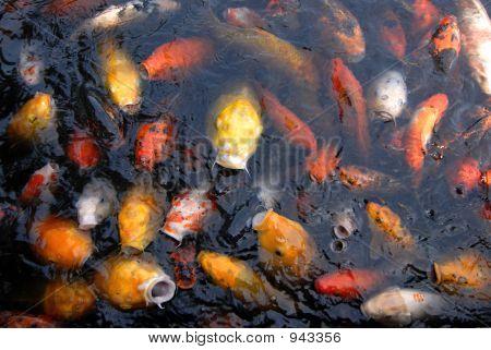 Fish Feeding Group