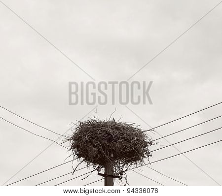 One stork in the nest in summer day, storks nest and family, stork mother in the nest, stork nest