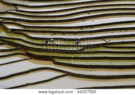 Terraced rice field in water season Mu Cang Chai, Vietnam