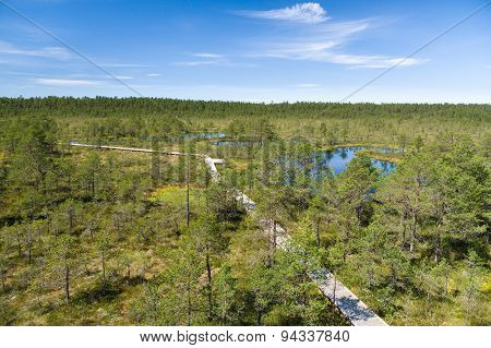 Hiking Trail Through Bog Area, Top View