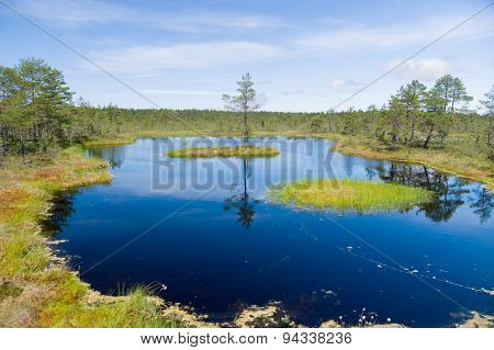 Swampland Lake, Small Island And Pine Tree Reflection On Water