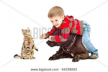 Boy, dog and cat cheerfully playing together