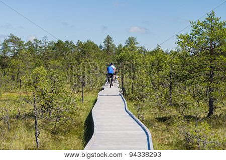 Cyclists On Wooden Hiking Trail Of Bog Area