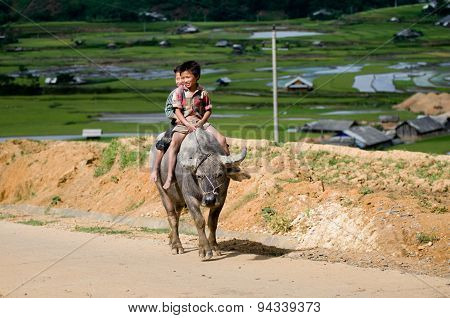 Two H'mong Ethnic Minority boys ride buffalo in MuCangChai, Vietnam
