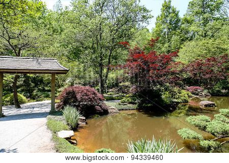 Japanese Maples And Garden
