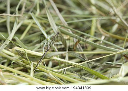 Needle in hay