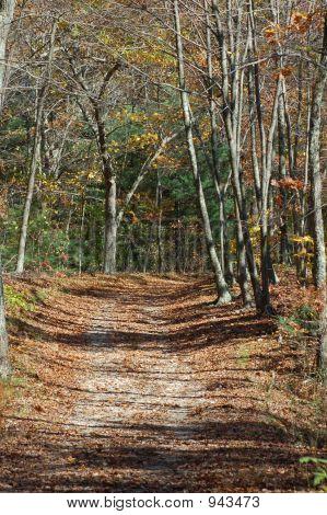 Sunlit Trail