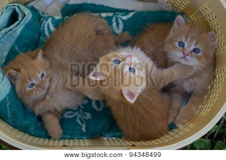 Red small kittens in grass.