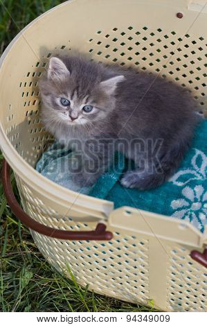 Small kitten in a basket.