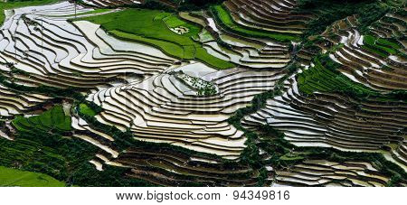 Terraced rice field in water season in Mu Cang Chai Vietnam