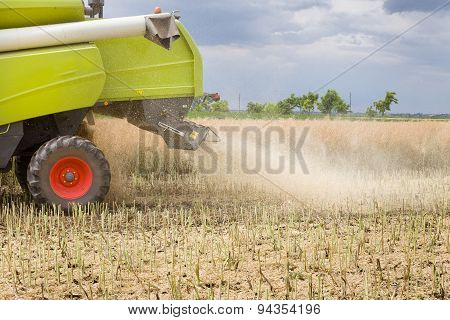 Combine Harvester Working In Rapeseed