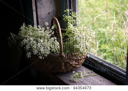 Still-life With A Bunch Of White Wild Flowers In A Basket