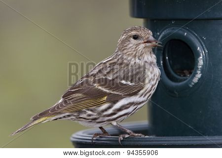 Pine Siskin At A Bird Feeder - Ontario, Canada