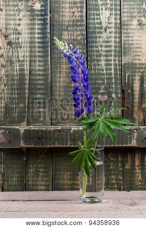 Young Lonely Lupine In A Glass