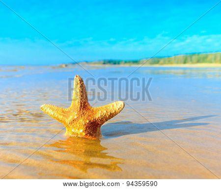 Dream Beach Shell