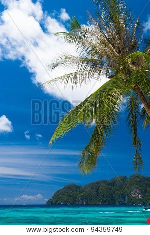 Palms Overhanging Under Trees