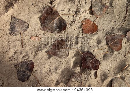 Sand Background With Dried Autumn Leaves