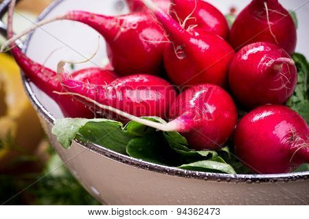 Red organic radishes in white colander on wooden rustic table