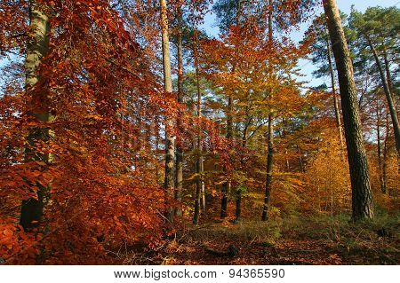 Autumn forest on a sunny day