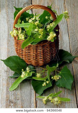 Linden-tree Blossom