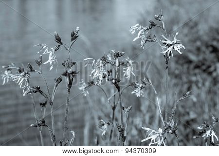 Wild Flowers On Stalks With Monochrome Effect